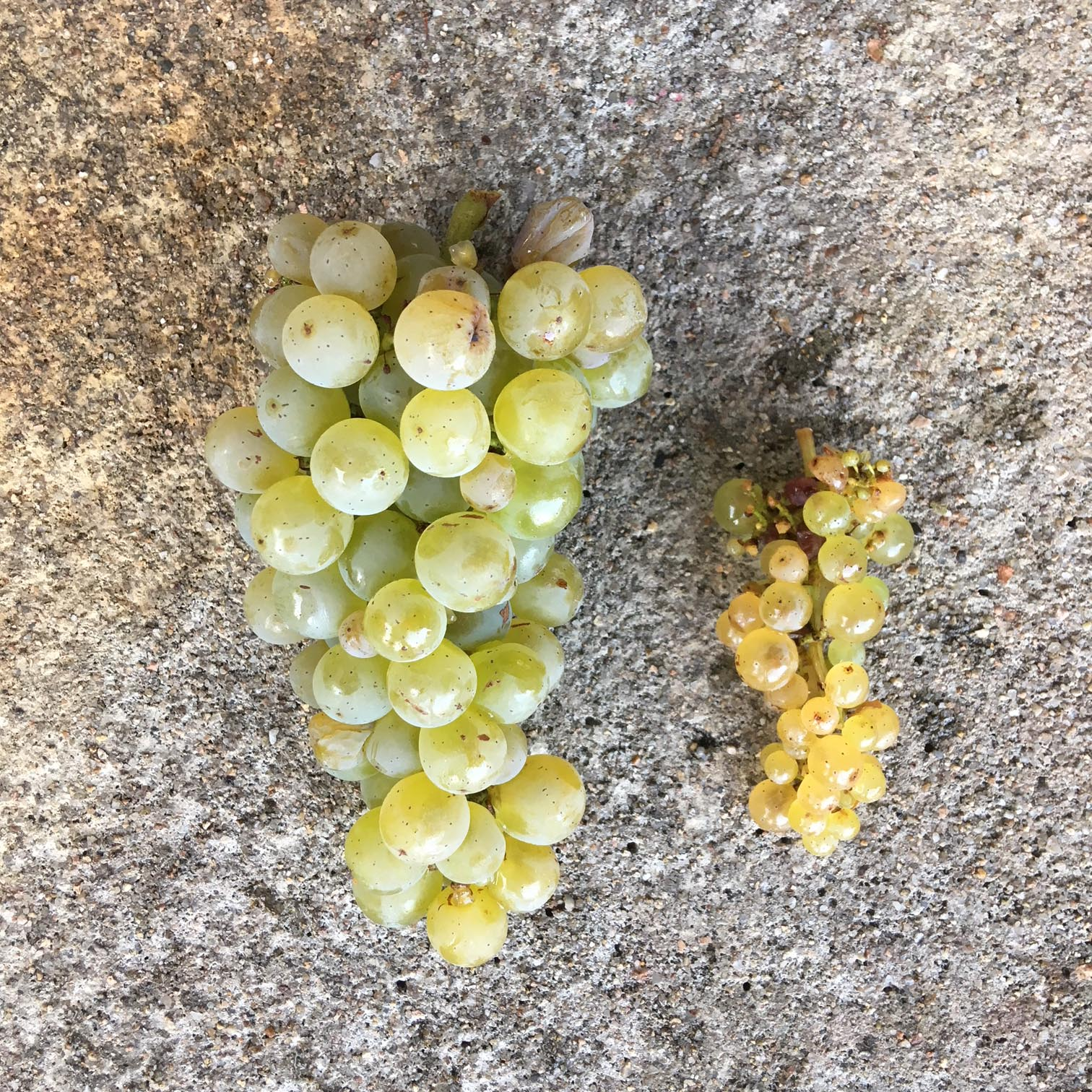 domainepelle-vendanges18-7