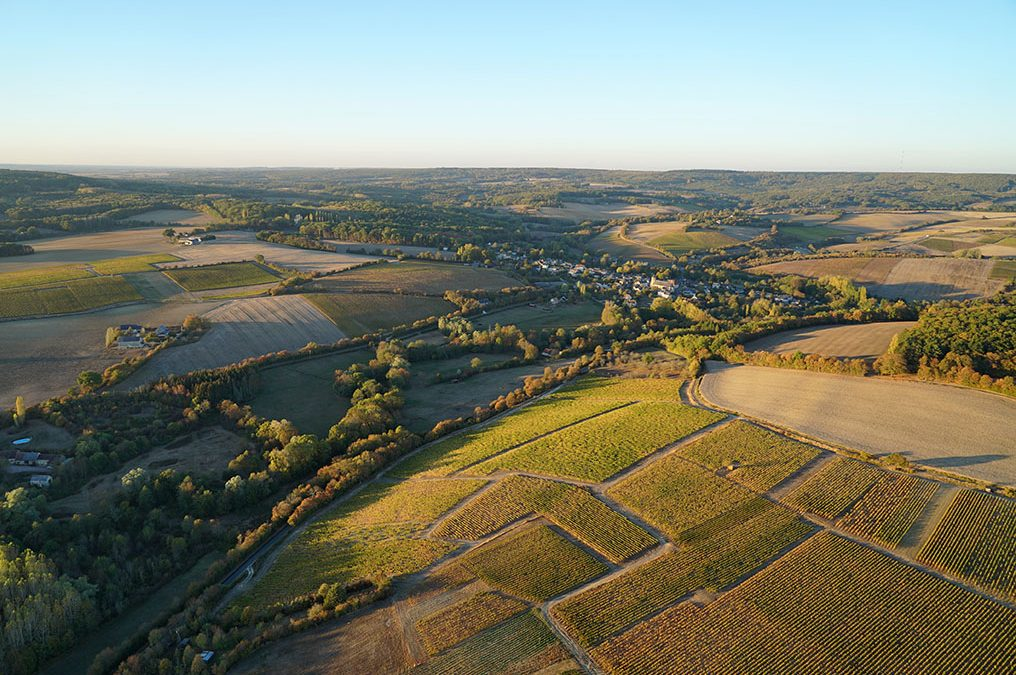 Our vines from the sky ….